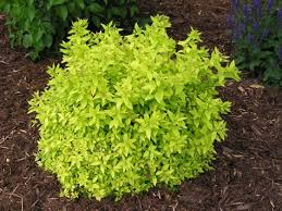 Small Shrubs For Front Yard - 21 best yard images on pinterest landscaping gardening and plants