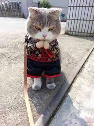 Happy New Year Cat Meme - happy chinese new year imgur