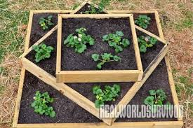 Strawberry Bed Diy How To Build A Sturdy Three Tiered Raised Garden Box
