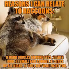Funny Raccoon Meme - relating to racoons imgflip