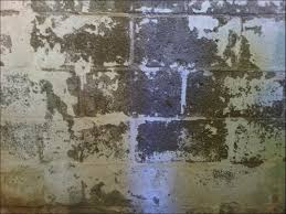 best of how to remove mold from basement walls