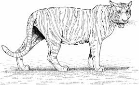 free coloring pages of cats cats to color pinterest tiger tiger coloring page coloring pages