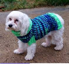 770 best dogs images on pinterest dogs dog sweaters and dog