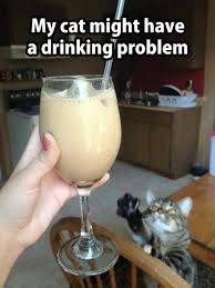 Drinking Problem Meme - my cat might have a drinking problem pet humor cute cat meme
