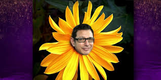 Jeff Goldblum Meme - jeff goldblum knows all about those weird jeff goldblum memes