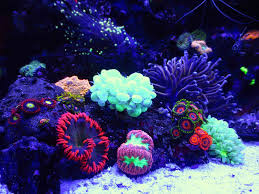165 best dream reef aquariums corals and fish images on pinterest