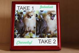 australian shepherd ipod 5 case sublimation conde systems 25 years expert experience