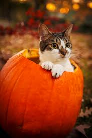 animals halloween samhain evening post cats halloween community board pinterest