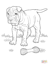 shar pei dog coloring page free printable coloring pages