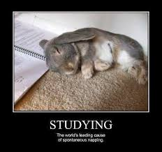 Monday School Meme - rabbit ramblings bunny monday meme day