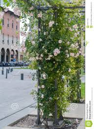 climbing plants on a pole stock photography image 34871162