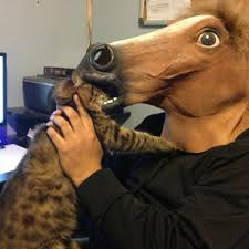 Horse Head Mask Meme - the 11 best ways to wear a horse mask from you re doing it right