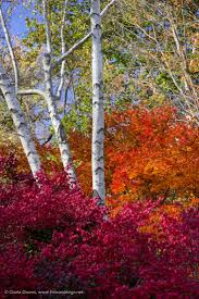 Fall Autumn by 3780 Best Autumn Images On Pinterest Autumn Leaves Fall And