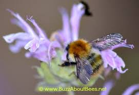 Bee Deterrent For Patio Herb Planting For Bees