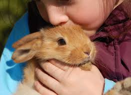 finding a home for your rabbit petfinder