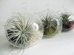 small hanging air plant terrarium your choice of moss colors 4 5