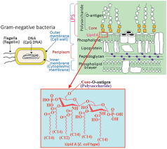 modification si e social sci frontiers structural modifications of bacterial lipopolysaccharide