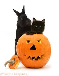 halloween black and white background pets black kitten and black rabbit with halloween pumpkin photo
