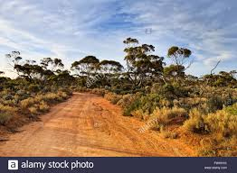 native plants wa remote unsealed road in outback australia at sunset lit by warm