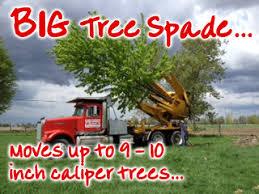 ottawa tree farm tree services planting removing 613 720 3451