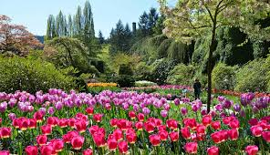 the butchart gardens victoria day trip u0026 victoria city highlights tour