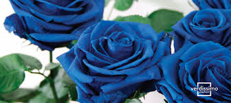 blue roses what is the origin of blue roses verdissimo