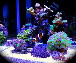 stunner led aquarium light strips fancy purple backgrounds aquarium supplies led aquarium lights