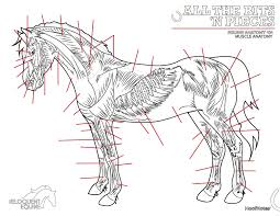 hoofnotes colouring page muscle anatomy u2013 the eloquent equine