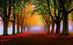 cute autumn backgrounds wallpaper autumn fall tress fog foliage 5k nature 1773