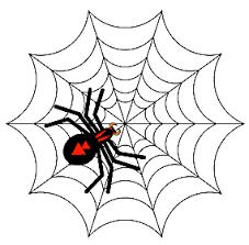spider drawing illustrator