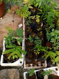 wa native plants organic gardening group pune micro nursery a house for native