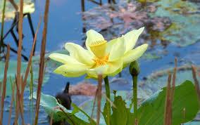 native plants of nc north carolina native plants society browse all plants