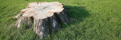 jerry s tree service arborist petaluma ca