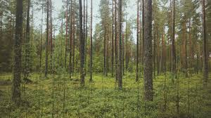 freeuse wood forest trees high quality photo