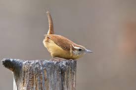 what u0027s that bird at your suet feeder audubon