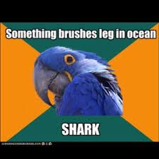 Paranoid Parrot Memes - 128 best paranoid parrot images on pinterest funny stuff ha ha