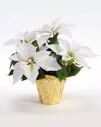 white poinsettia shop small table top silk poinsettia plants at officescapesdirect