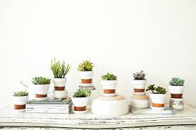 painted pots succulents