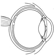 Anatomy Of The Eye Anatomy Of The Eye Coloring