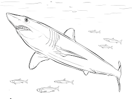 great great white shark coloring pages with shark coloring page