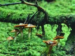 wallpaper 3d mushroom mushroom wallpaper