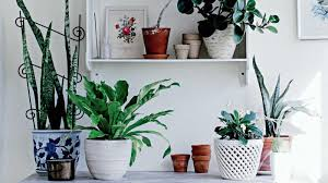 Fragrant Indoor Plants Low Light - homelife how to choose the ideal indoor plant