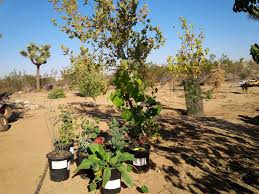 sacramento native plants micro eco farming rainshadow farm institute