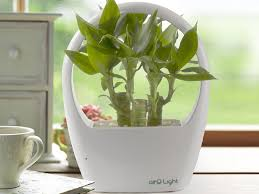 Most Fragrant Indoor Plants This Planter Has A Built In Led Light That Makes It Almost