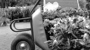 garten und landschaftsbau kiel pflanzen kiel russee wochenmarkt frühling primeln bellis