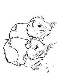 free guinea pig coloring