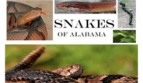 How To Find Snakes In Your Backyard 50 Snakes You Might Come Across In Alabama Al Com