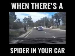 Meme Spider - when you see a spider in your car youtube