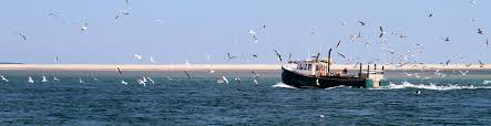 save our sound voice your opinion on nantucket sound