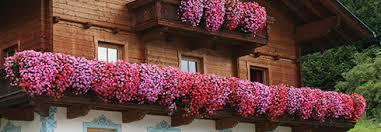 balkon blumen tipps bei problemen mit balkonblumen